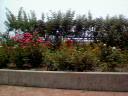 岐阜バラ公園