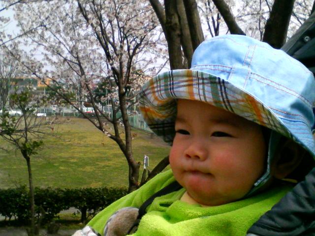 ナガオーと桜